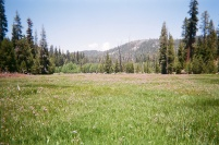 meadow2010